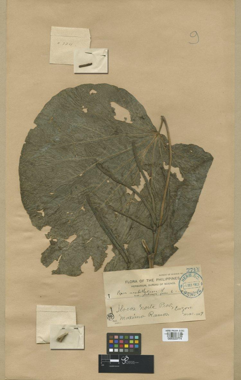 Geneva Herbaria Catalogue