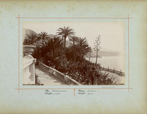 France, Monte-Carlo, vue sur la mer depuis une terrasse (1885)