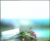 Vignette 2 - Titre : Herbier vidéo: Cadaques