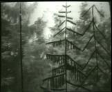 Vignette 3 - Titre : Vidéo paysage: Trois sapins