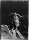 Victor Bérard (Morez, 10.08.1864 — Paris, 13.11.1931), commanditaire, Fred Boissonnas (Genève, 18/06/1858 — Genève, 17/10/1946), photographe