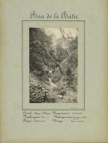 Canton de Genève, bois de la Bâtie