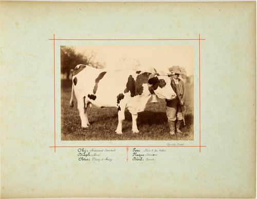 Jeune garçon avec vache