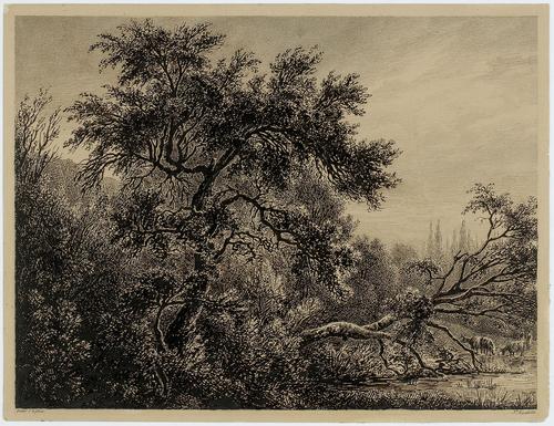 Rhône, arbres au bord du fleuve dans la campagne Vieusseux