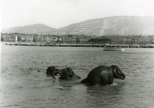 Genève, éléphants au large du quai Wilson