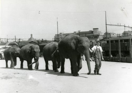 Genève, gare Cornavin: éléphants