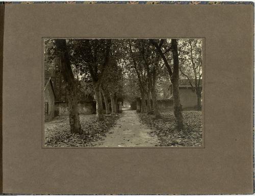 Vernier, maison Naville: allée de platanes