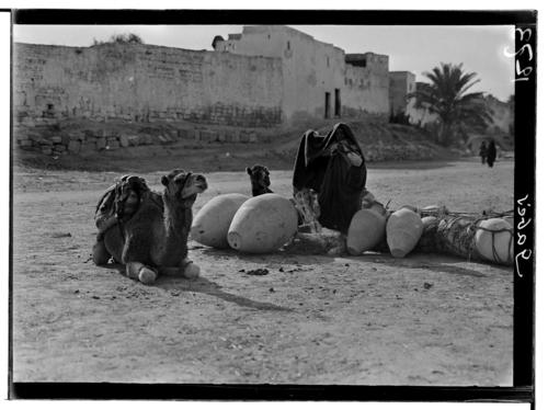 Tunisie, Gabès: chameau couché