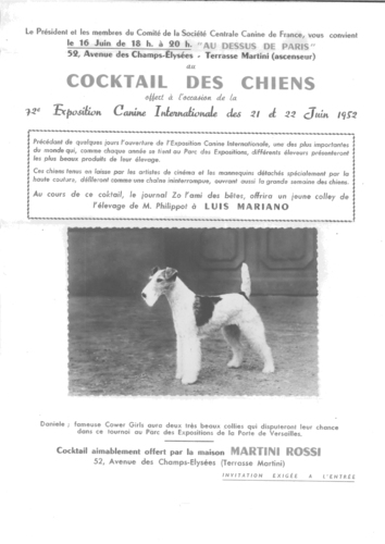 Fox terrier d'Yva Bella. Cocktail des chiens. 72e exposition canine internationale