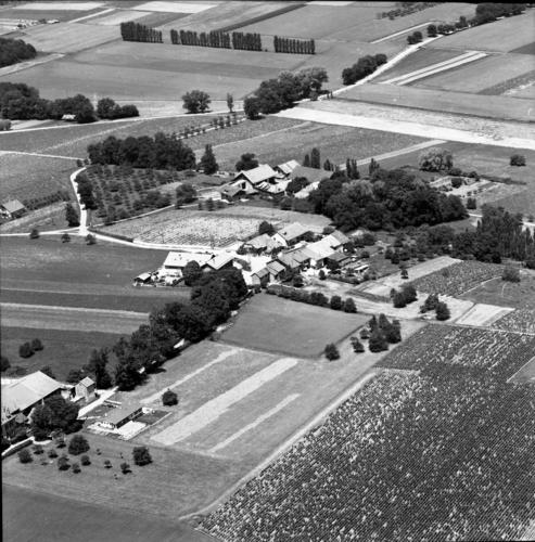 Meinier, le Carre d'Aval et la Touvière: vue aérienne